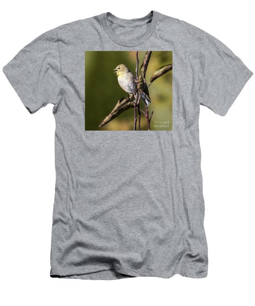 Men's T-Shirt (Slim Fit) featuring the photograph American Goldfinch In Fall Colors  by Ricky L Jones