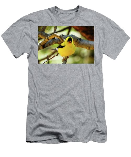 American Goldfinch On Aspen Men's T-Shirt (Athletic Fit)