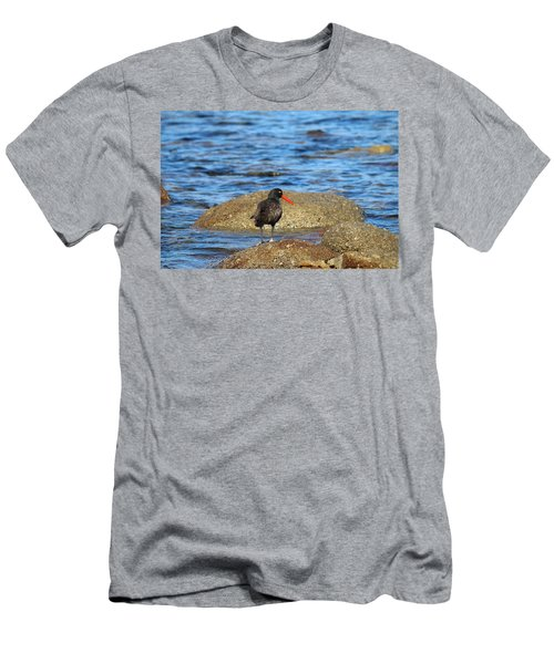 American Oystercatcher  Men's T-Shirt (Athletic Fit)