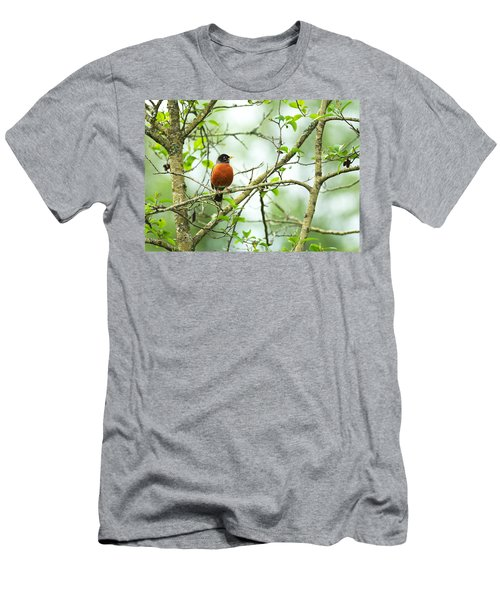 American Robin On Tree Branch Men's T-Shirt (Athletic Fit)