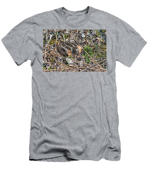 American Woodcock Incubating Her Chicks Men's T-Shirt (Athletic Fit)