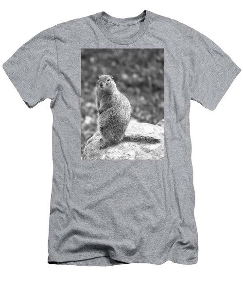 Arctic Ground Squirrel Men's T-Shirt (Athletic Fit)
