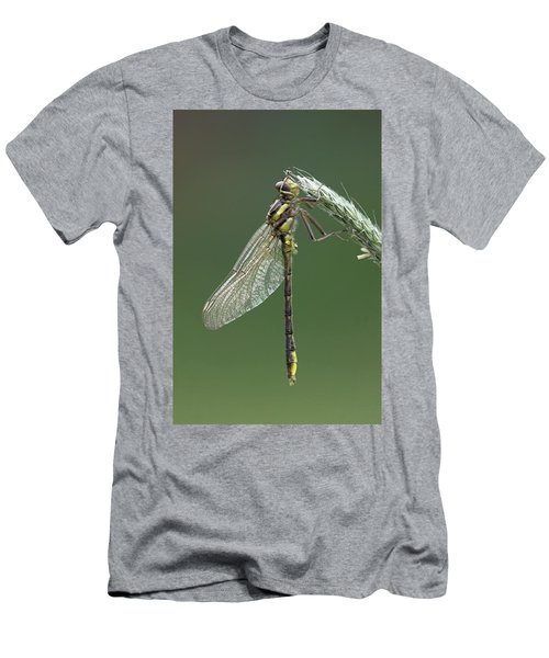 Ashy Or Dusky Clubtail Men's T-Shirt (Athletic Fit)