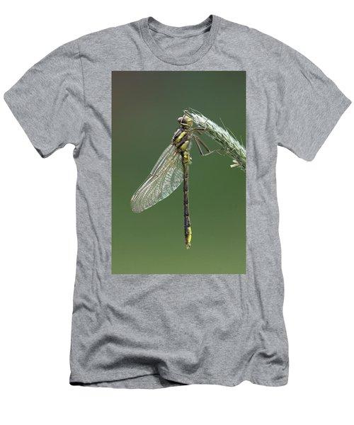 Ashy Or Dusky Clubtail Men's T-Shirt (Athletic Fit)