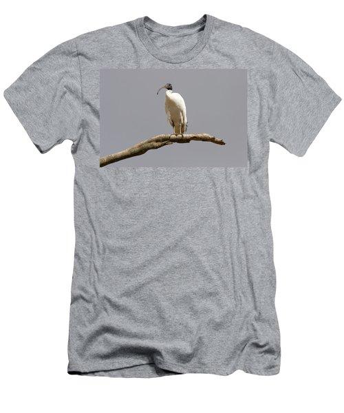 Australian White Ibis Perched Men's T-Shirt (Athletic Fit)