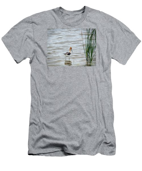 Avocet  Men's T-Shirt (Athletic Fit)