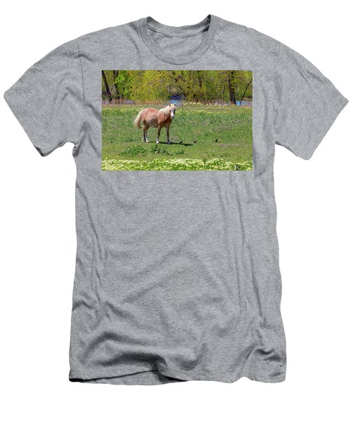 Beautiful Blond Horse And Four Little Birdies Men's T-Shirt (Slim Fit) by James BO Insogna