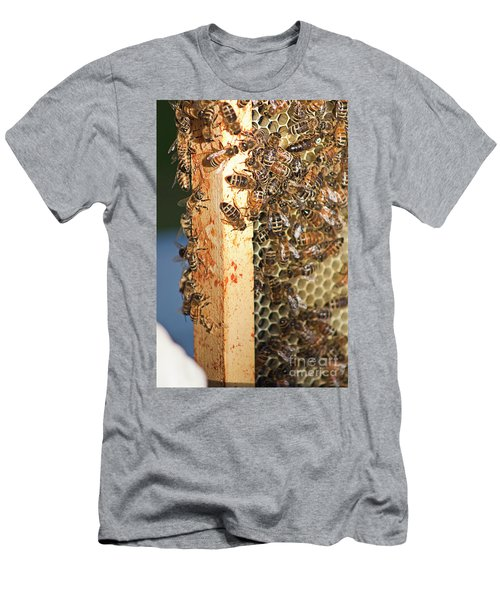 Bee Hive 4 Men's T-Shirt (Slim Fit) by Janie Johnson