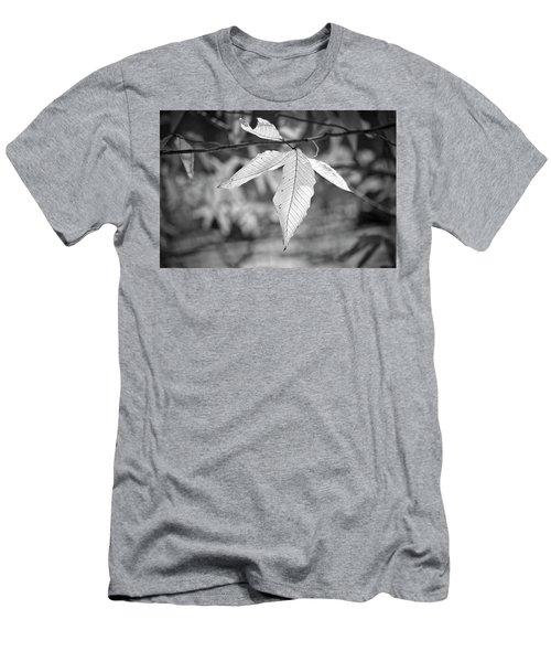 Beech Leaves - Uw Arboretum - Madison - Wisconsin Men's T-Shirt (Athletic Fit)