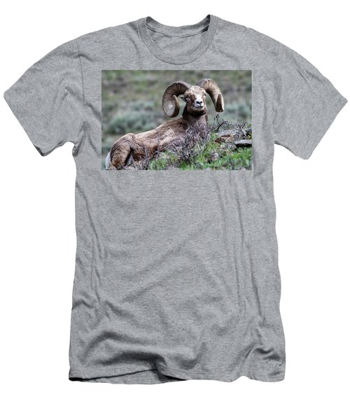 Men's T-Shirt (Athletic Fit) featuring the photograph Big Horn Sheep #3 by Scott Read