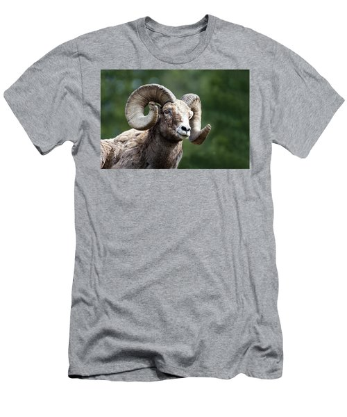 Men's T-Shirt (Athletic Fit) featuring the photograph Big Horn Sheep by Scott Read