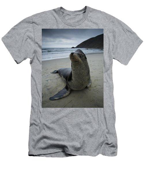 Big Seal Men's T-Shirt (Athletic Fit)