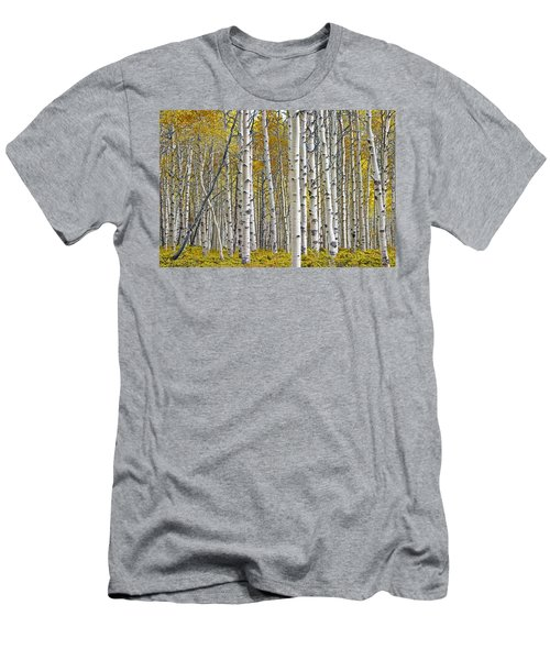 Birch Tree Grove With A Touch Of Yellow Color Men's T-Shirt (Athletic Fit)