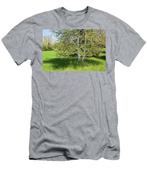 Birch Tree Men's T-Shirt (Athletic Fit)