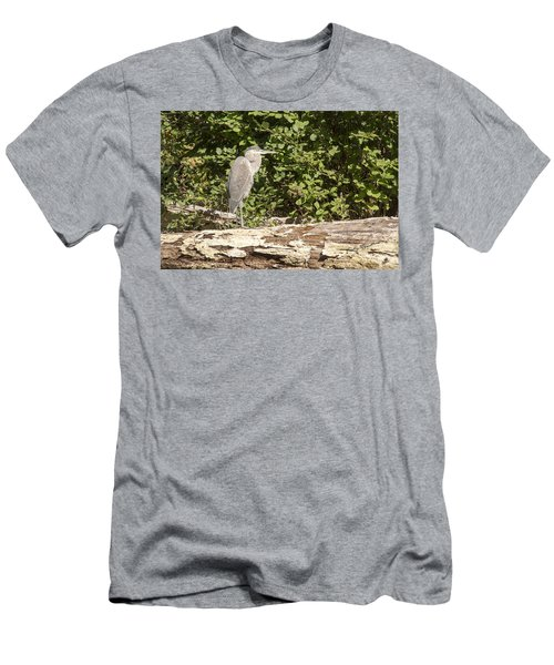 Bird On A Log Men's T-Shirt (Athletic Fit)