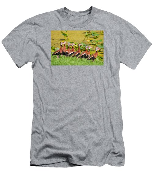 Black Bellied Whistling Ducks Men's T-Shirt (Athletic Fit)