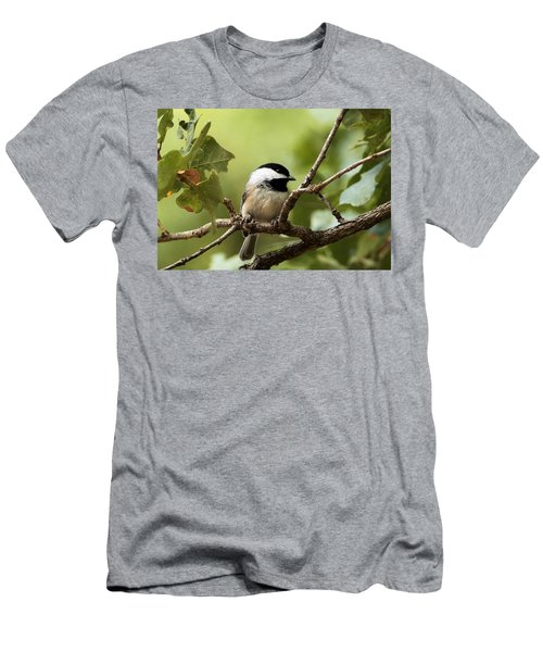 Black Capped Chickadee On Branch Men's T-Shirt (Slim Fit) by Sheila Brown