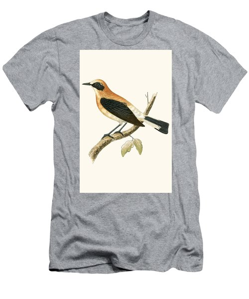 Black Eared Wheatear Men's T-Shirt (Athletic Fit)