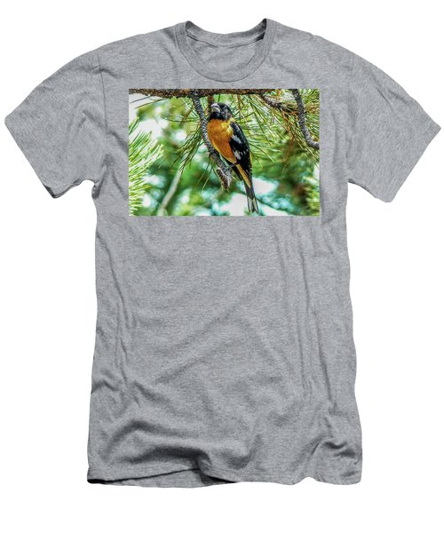 Black-headed Grosbeak On Pine Tree Men's T-Shirt (Athletic Fit)