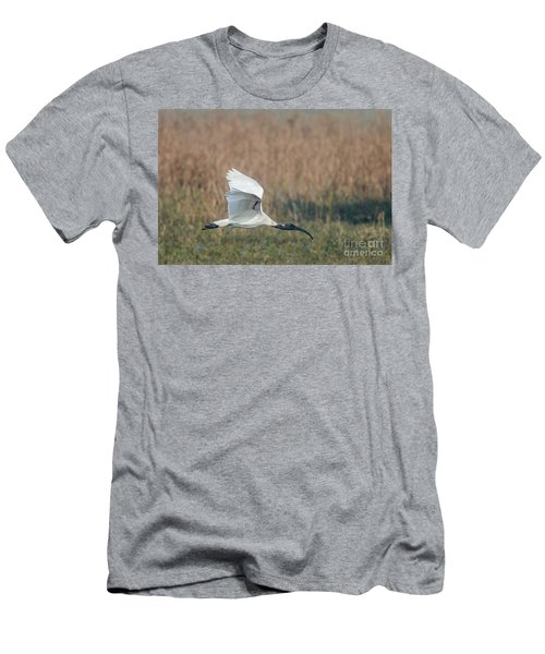 Black-headed Ibis 01 Men's T-Shirt (Athletic Fit)