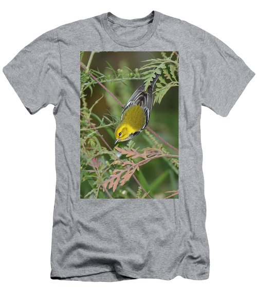 Black-throated Green Intent Men's T-Shirt (Slim Fit) by Alan Lenk