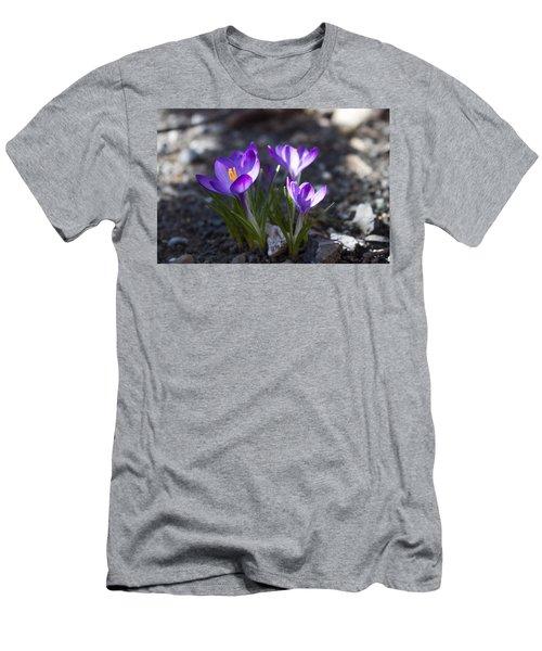 Blooming Crocus #3 Men's T-Shirt (Slim Fit) by Jeff Severson