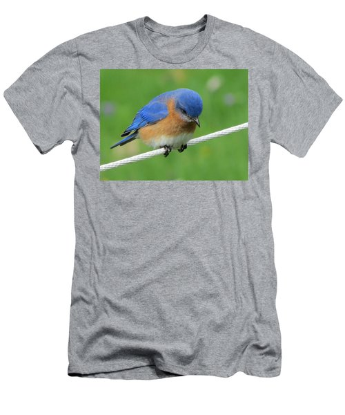 Blue Bird On Clothesline Men's T-Shirt (Athletic Fit)