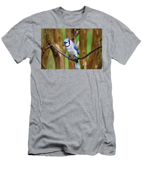 Blue Jay On A Branch Men's T-Shirt (Slim Fit) by Trina Ansel