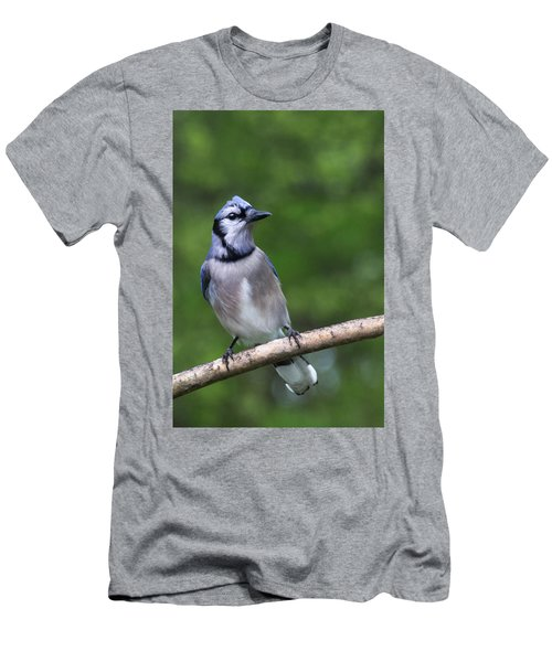 Blue Jay On Alert Men's T-Shirt (Athletic Fit)