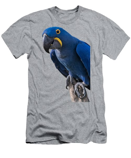 Blue Macaw Men's T-Shirt (Athletic Fit)