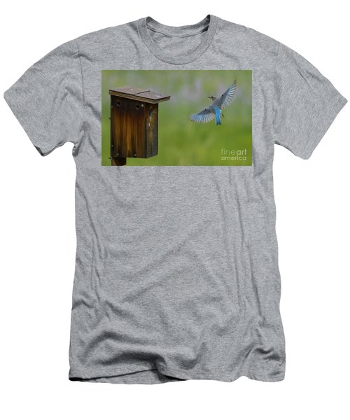 Bluebird Feeding Time Men's T-Shirt (Athletic Fit)