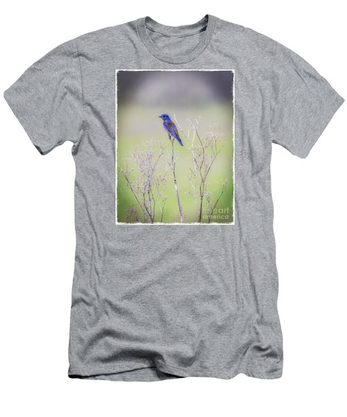 Men's T-Shirt (Slim Fit) featuring the photograph Bluebird On Hemlock by Mitch Shindelbower