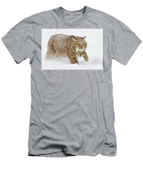 Bobcat In Snow Men's T-Shirt (Slim Fit) by Jerry Fornarotto