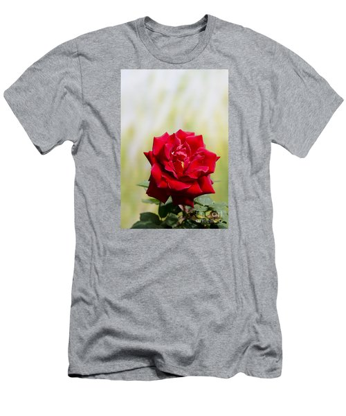Bright Red Rose Men's T-Shirt (Slim Fit) by Perry Van Munster
