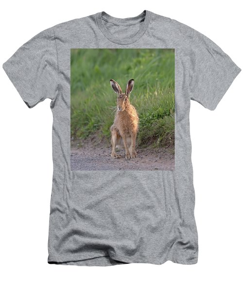 Brown Hare Sat On Track At Dawn Men's T-Shirt (Athletic Fit)