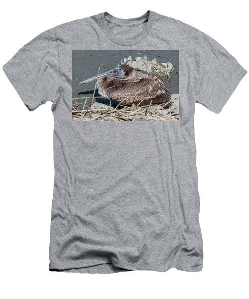 Brown Pelican 3 March 2018 Men's T-Shirt (Athletic Fit)