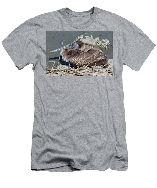 Brown Pelican 3 March 2018 Men's T-Shirt (Athletic Fit)