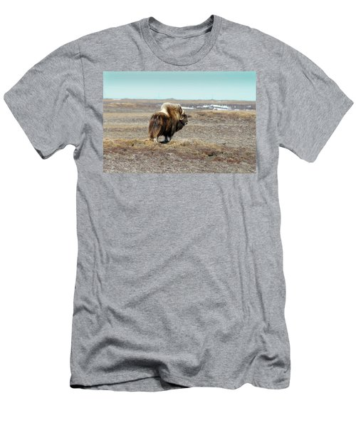 Bull Musk Ox Men's T-Shirt (Athletic Fit)