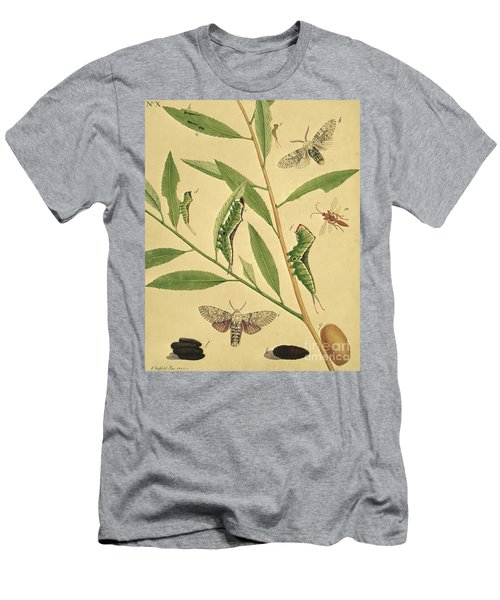 Butterflies, Caterpillars And Plants Plate X By J Dutfield Men's T-Shirt (Athletic Fit)