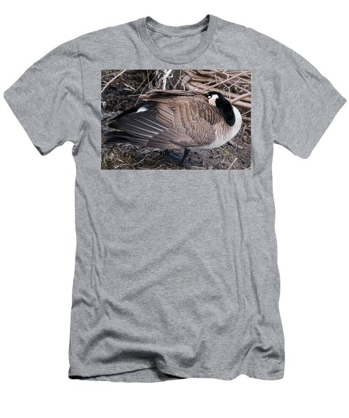 Men's T-Shirt (Slim Fit) featuring the photograph Canada Goose Asleep by Edward Peterson