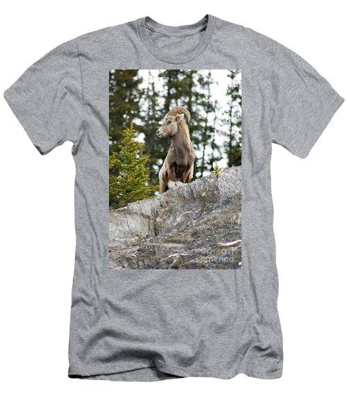 Canadian Bighorn Side Profile Men's T-Shirt (Athletic Fit)