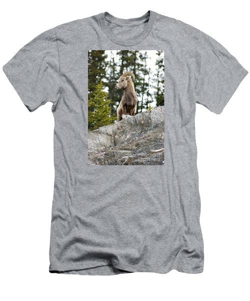 Canadian Bighorn Side Profile Men's T-Shirt (Athletic Fit)
