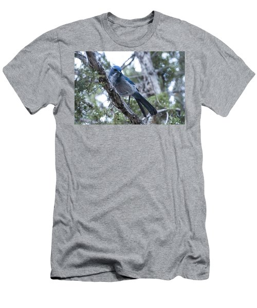 Canyon Jay Men's T-Shirt (Athletic Fit)