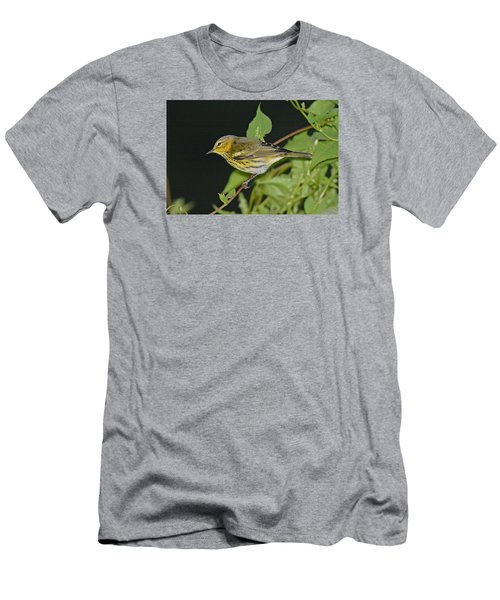 Cape May Warbler Men's T-Shirt (Slim Fit) by Alan Lenk
