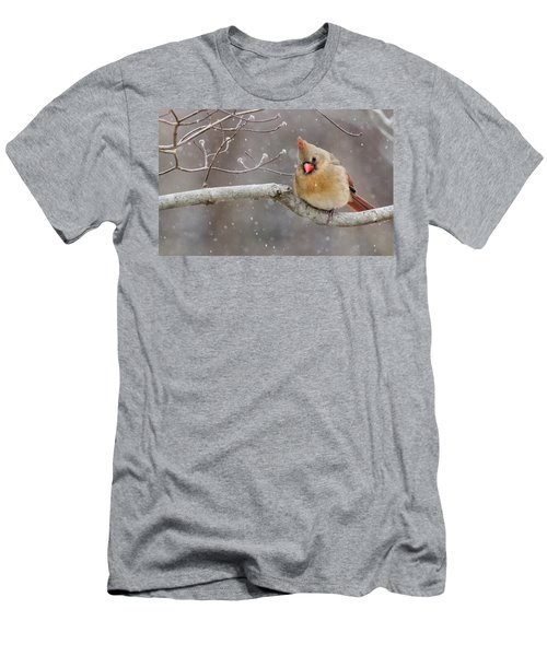 Cardinal And Falling Snow Men's T-Shirt (Athletic Fit)