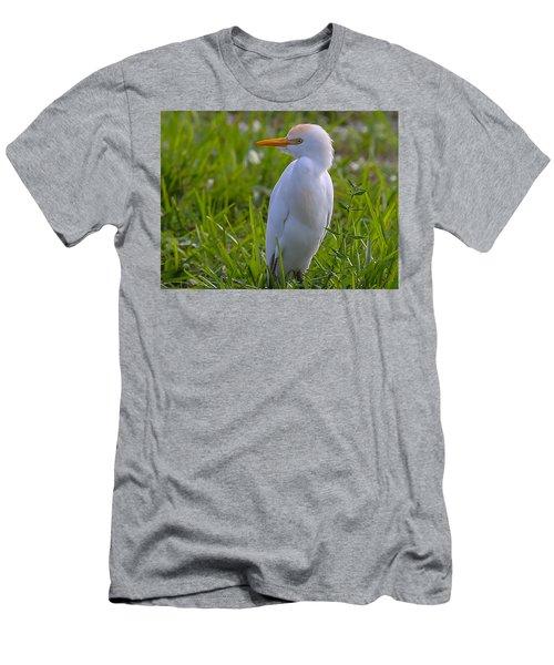Cattle Egret Men's T-Shirt (Athletic Fit)