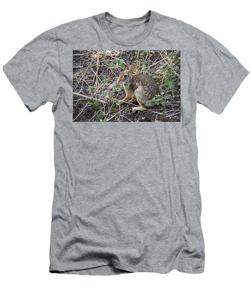 Cedar Hill Bunny Men's T-Shirt (Athletic Fit)