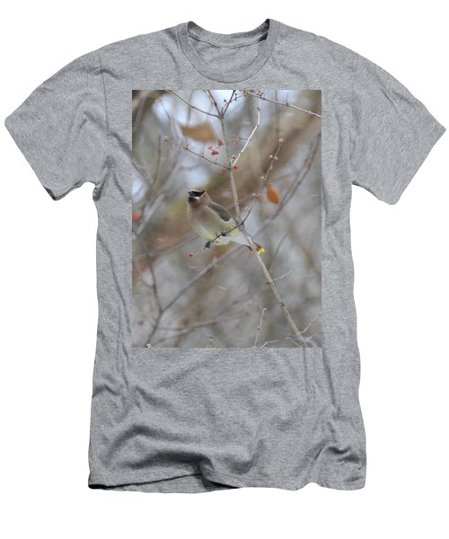 Cedar Wax Wing 2 Men's T-Shirt (Slim Fit) by David Arment