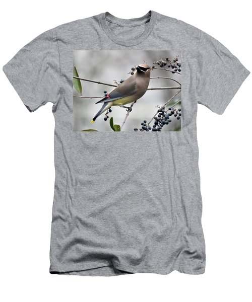Cedar Waxwing 1 Men's T-Shirt (Slim Fit) by Kathy Long