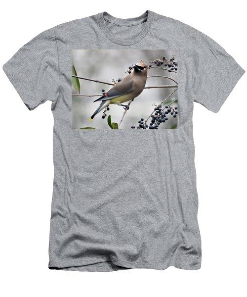 Cedar Waxwing 1 Men's T-Shirt (Athletic Fit)